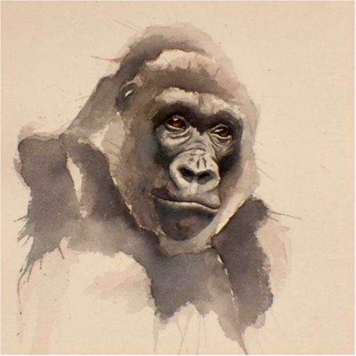 Watercolor image of an endangered Grauer Gorilla